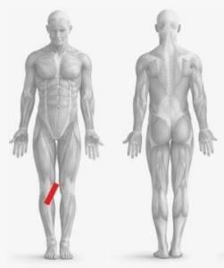 dolore interno ginocchio