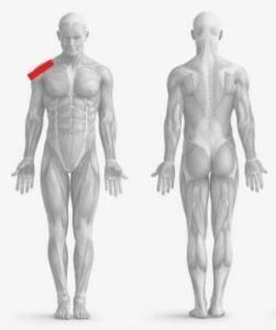 tendinite spalla